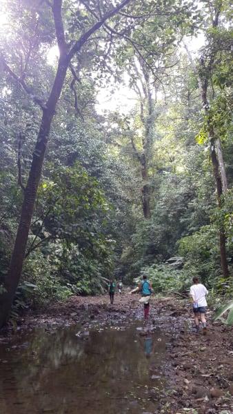 Osa Wild Travel Mountain Trek in Northern Corcovado La Palma Costa Rica null
