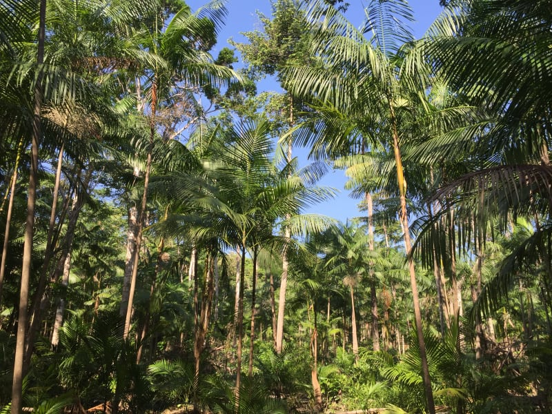 Vivejar Tours Discover the Secrets and Spices of the Amazon Belem Brazil undefined