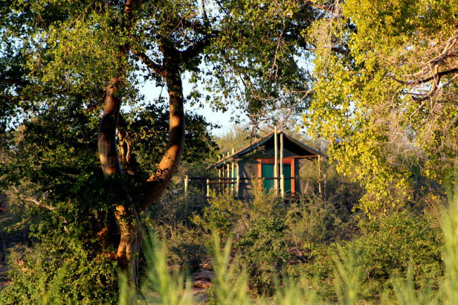 Transfrontier Parks Destinations Best of Limpopo: Traditions, Nature and Safari Adventure Limpopo South Africa undefined