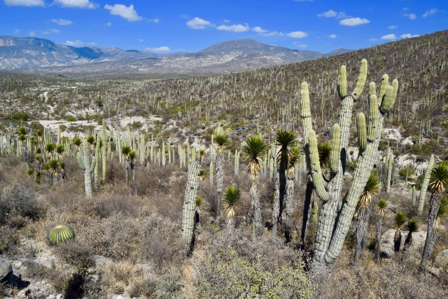 Totonal Viajes Mexico City to Oaxaca Coast: Culture, Biodiversity, and Art of Mexico Mexico City Mexico undefined
