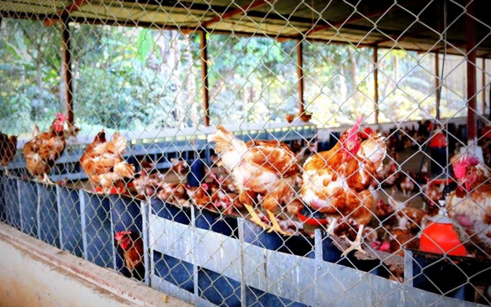 Matagalpa Tours La Canavalia Farm, La Sombra Ecolodge and Peñas Blancas Matagalpa Nicaragua La Canavalia Farm