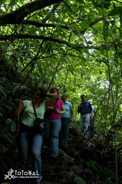 Totonal Viajes The Green South of Veracruz Los Tuxtlas and Tlacotalpan Mexico Trekking in the Tuxtlas jungle