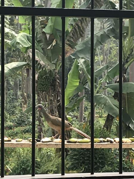 ZAIA Travel Explore Colombian Coffee and Nature Bogota Colombia Birds at Hacienda Roble
