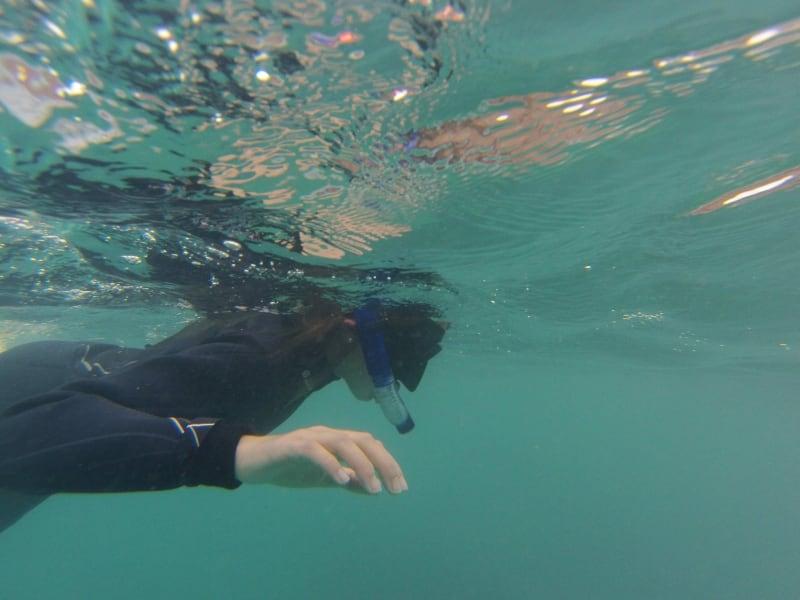Budeo Tours Snorkel Rinconada Marine Reserve Antofagasta Chile null
