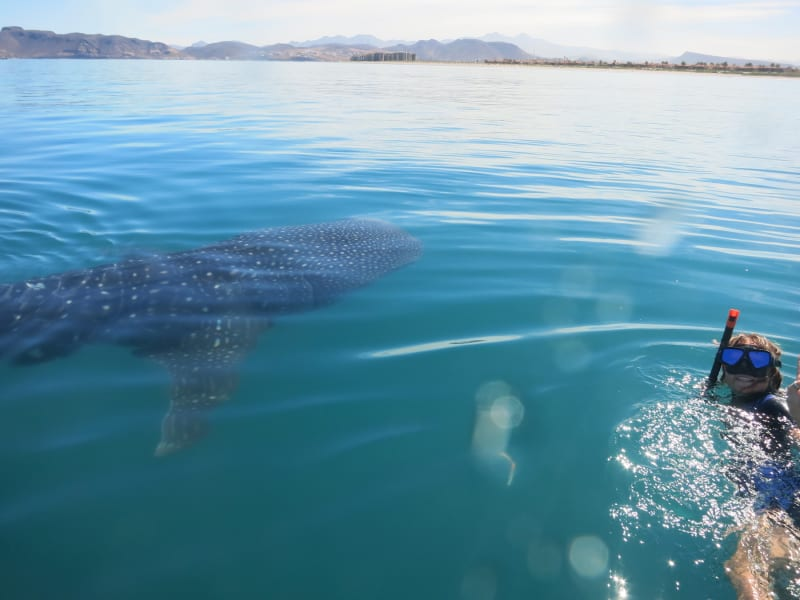 RED Travel Mexico Whale shark researcher for a day La Paz Mexico null