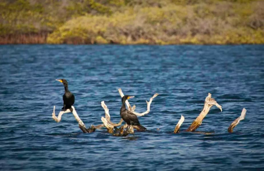 RED Travel Mexico Baja Sea Turtles, Gray Whales and Island Getaway La Paz Mexico undefined