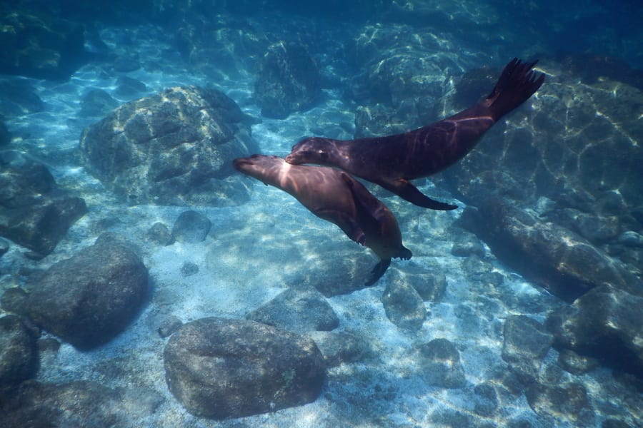 RED Travel Mexico Espíritu Santo Island Getaway La Paz Mexico Sea Lions Espíritu Santo Baja