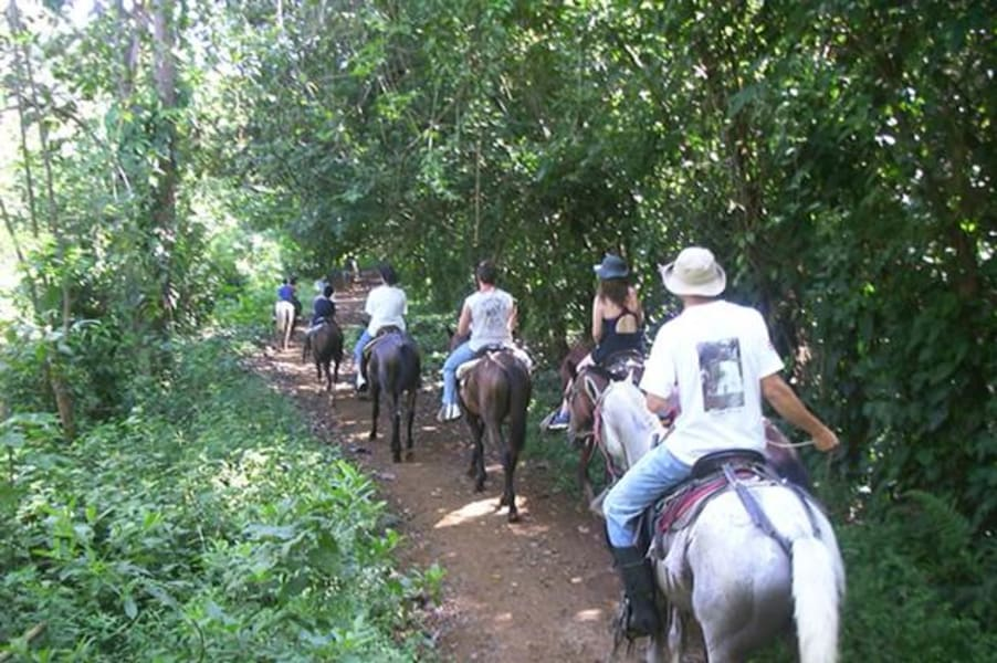 Rancho Quemado Development Association Jungle Horseback Ride in Rancho Quemado Rancho Quemado Costa Rica null