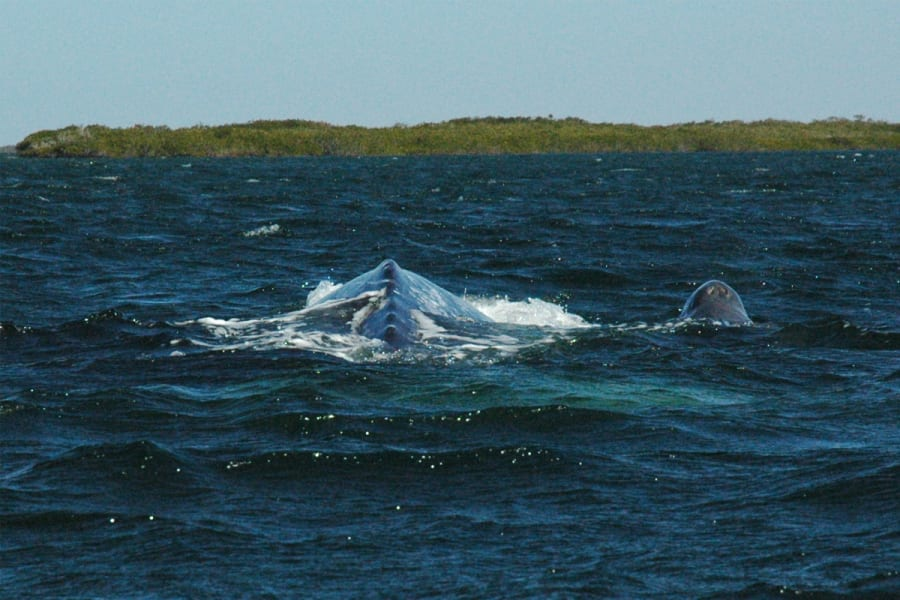 RED Travel Mexico Gray Whale and Sea Turtle Research Camp  La Paz Mexico Whale watching in Magdalena Bay