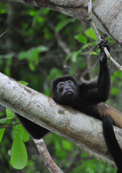 TRC Viajes Karen Mogensen Hiking Adventure at Cerro Escondido Lodge Jicaral Costa Rica undefined