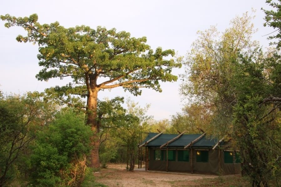 Transfrontier Parks Destinations Limpopo Wildlife and Cultural Adventure Phalaborwa South Africa Your room at Awelani, amongst the baobabs