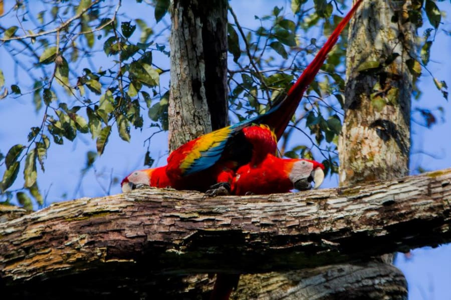 Uakari Lodge Amazon Birdwatching and Floating Lodge Experience Tefe Brazil undefined
