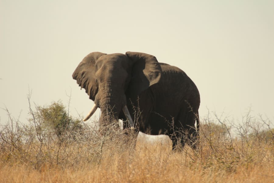 Transfrontier Parks Destinations Limpopo Wildlife and Cultural Adventure Phalaborwa South Africa Get up close with elephants and other wildlife in Kruger