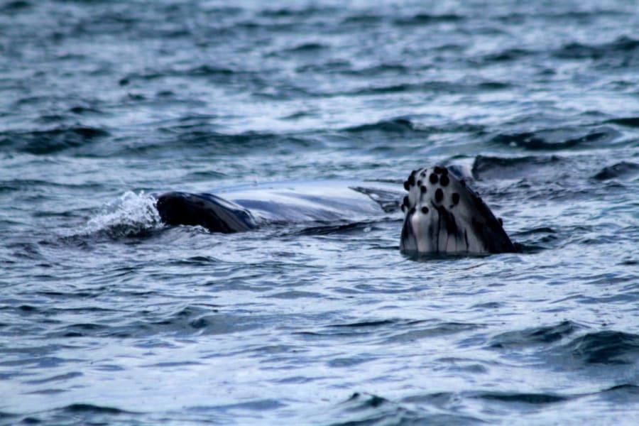 MARO Experiences Nature and Wildlife of the Pacific Coast San Jose > Manuel Antonio > Osa Peninsula Costa Rica undefined