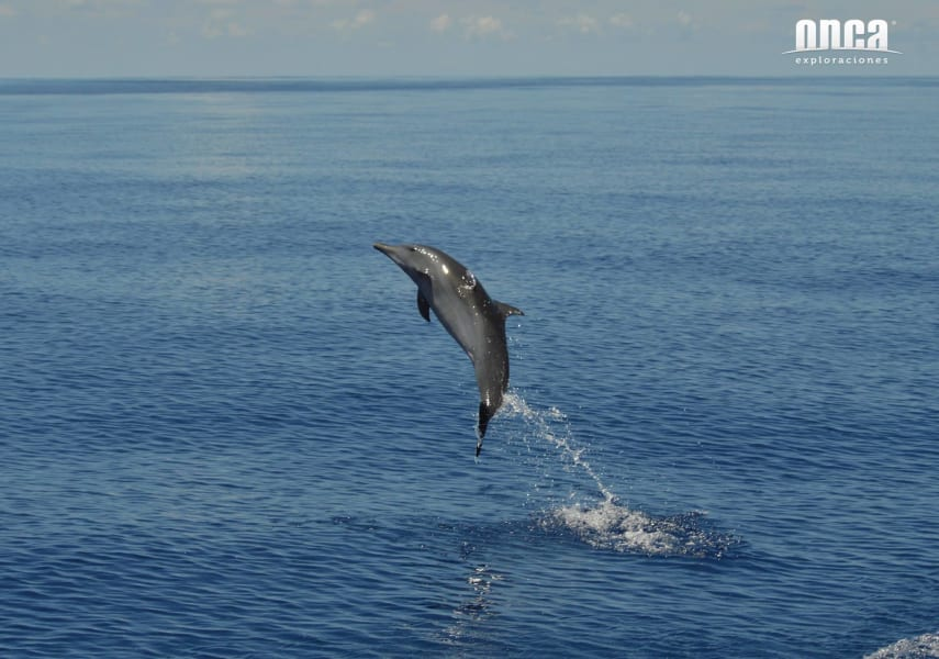 Onca Explorations Wild Dolphin Adventure Mazatlan Mexico undefined