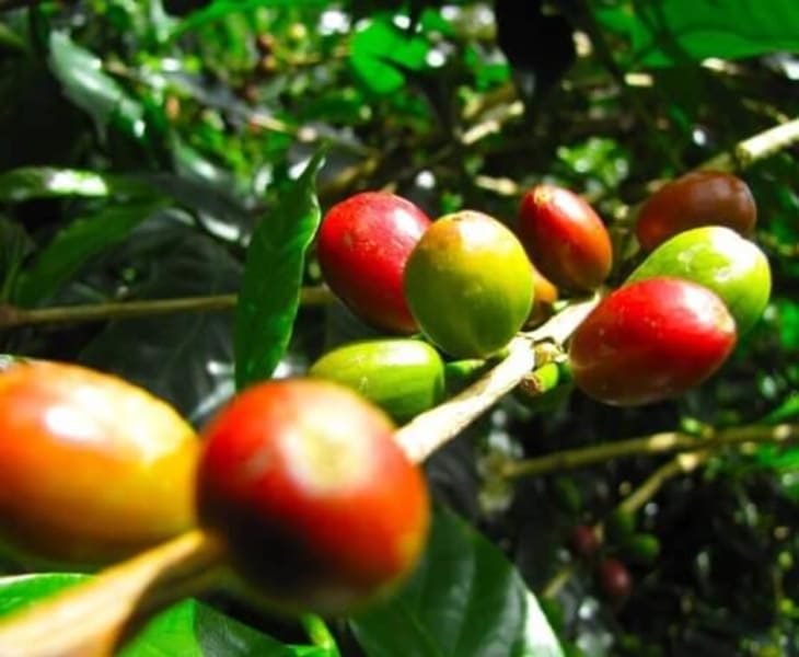ZAIA Travel Classic Colombia: From Bogota to Cartagena Bogota Colombia Coffee Beans