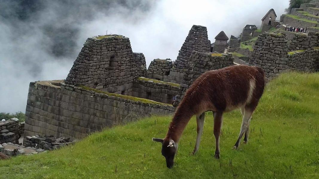 TreXperience Peru The Ancient Kingdoms of Peru Lima Peru undefined
