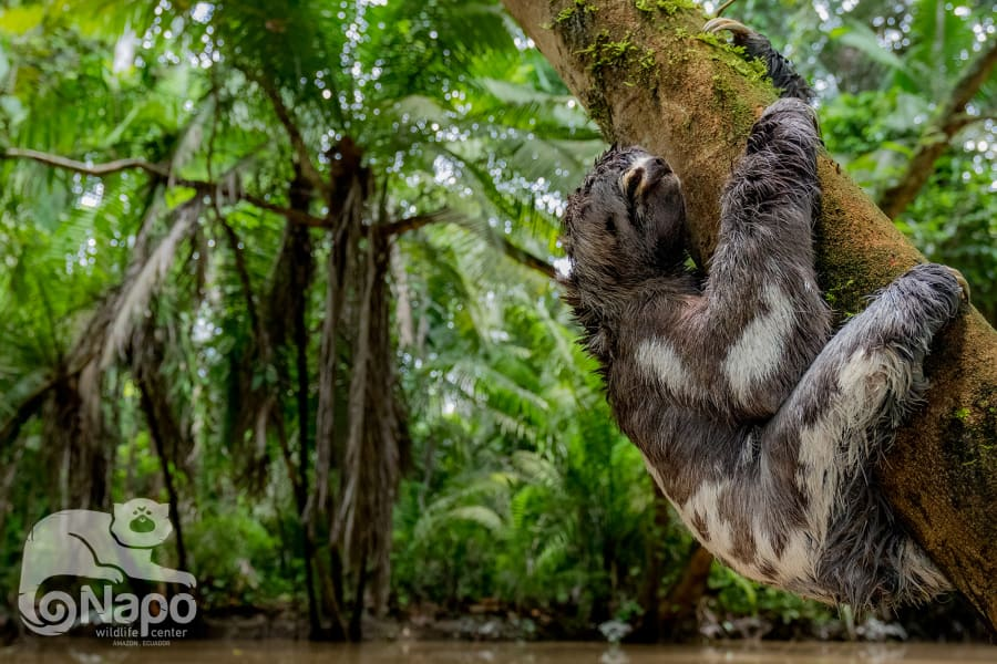 Napo Wildlife Center Ecolodge Yasuni Kichwa Rainforest Excursion Orrelana Province Ecuador undefined