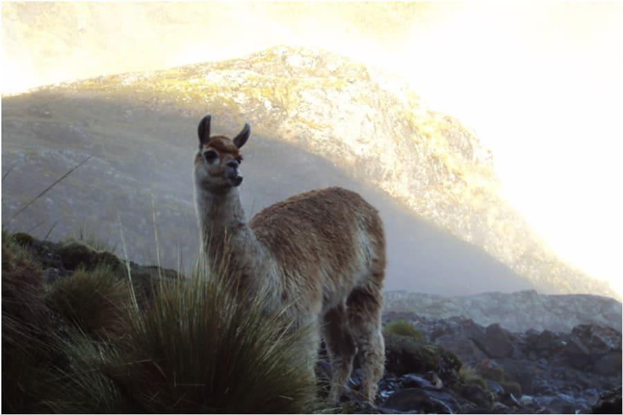 CBC Tupay Visit the Andean Shepherds of the Quishuarani Community Quishuarani Peru undefined