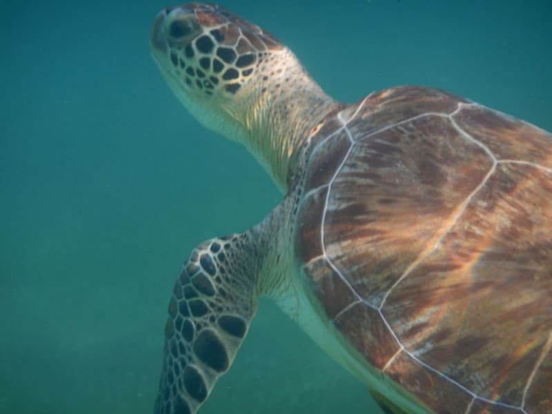 Totonal Viajes Explore Tulum's Nature: Cenotes and Caribbean Biosphere Tulum Mexico Sea turtle