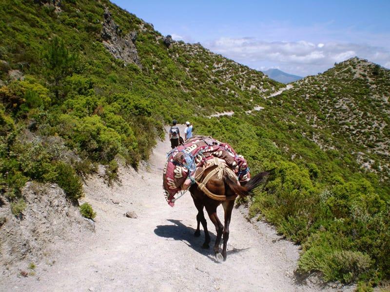 Ecotourisme Randonnees Chefchaouen Chefchaouen Morocco null