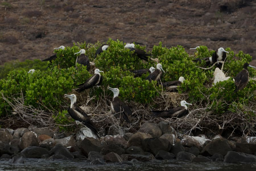 RED Travel Mexico Espíritu Santo Island Getaway La Paz Mexico Espíritu Santo Island birds