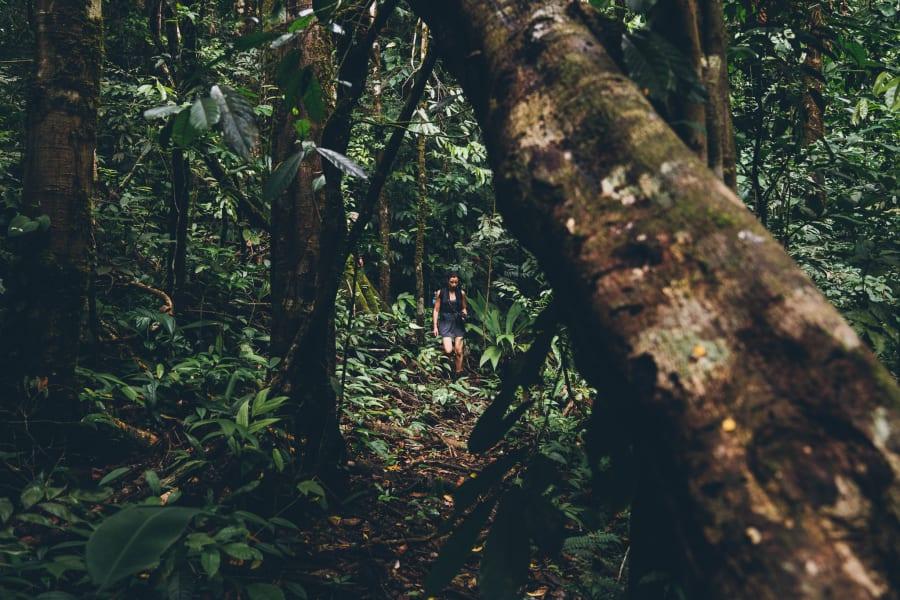 Conservation Association of Dos Brazos Corcovado Hike 'El Tigre' Dos Brazos Costa Rica