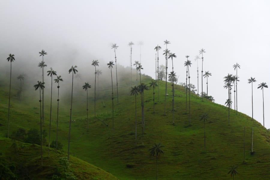 ZAIA Travel Classic Colombia: From Bogota to Cartagena Bogota Colombia Valle de Cocora