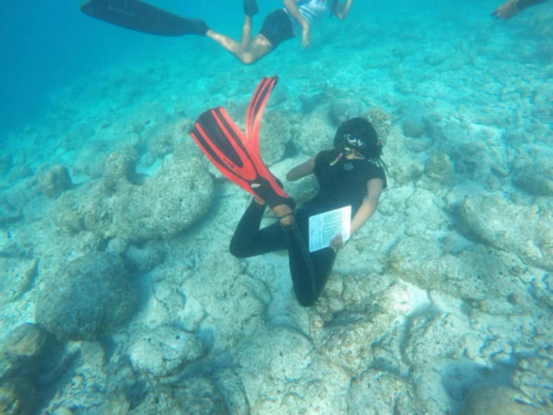 Secret Paradise Maldives Dive to Conserve Marine Life in the Maldives Villimale Maldives Coral restoration in progress