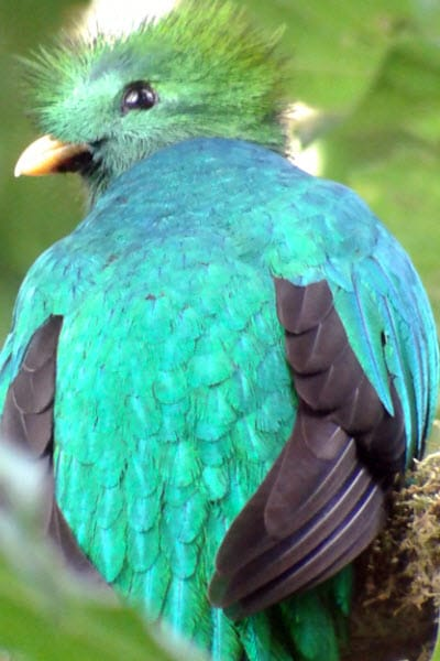 Pasión Costa Rica Tours Monteverde Costa Rica undefined