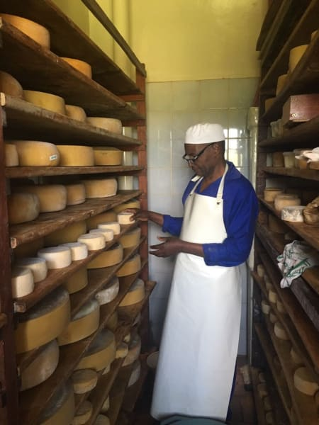 Transfrontier Parks Destinations Limpopo Wildlife and Cultural Adventure Phalaborwa South Africa Checking out some local, organic cheese