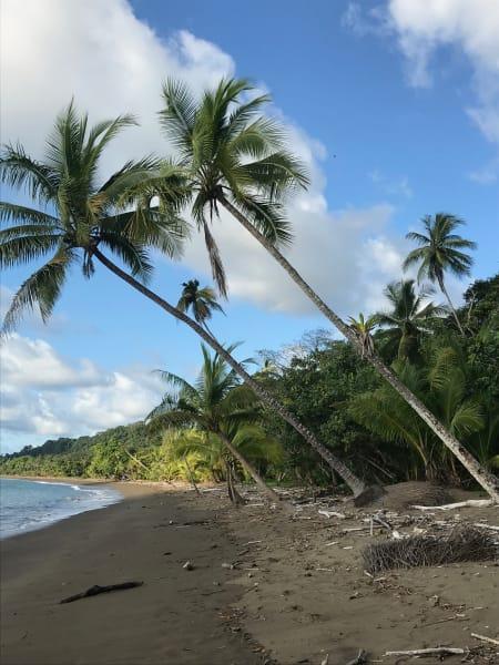 MARO Experiences Caribbean Rainforests, Volcanoes & the Pacific Coast Tortuguero to Arenal to Monteverde to Manuel Antonio Costa Rica undefined