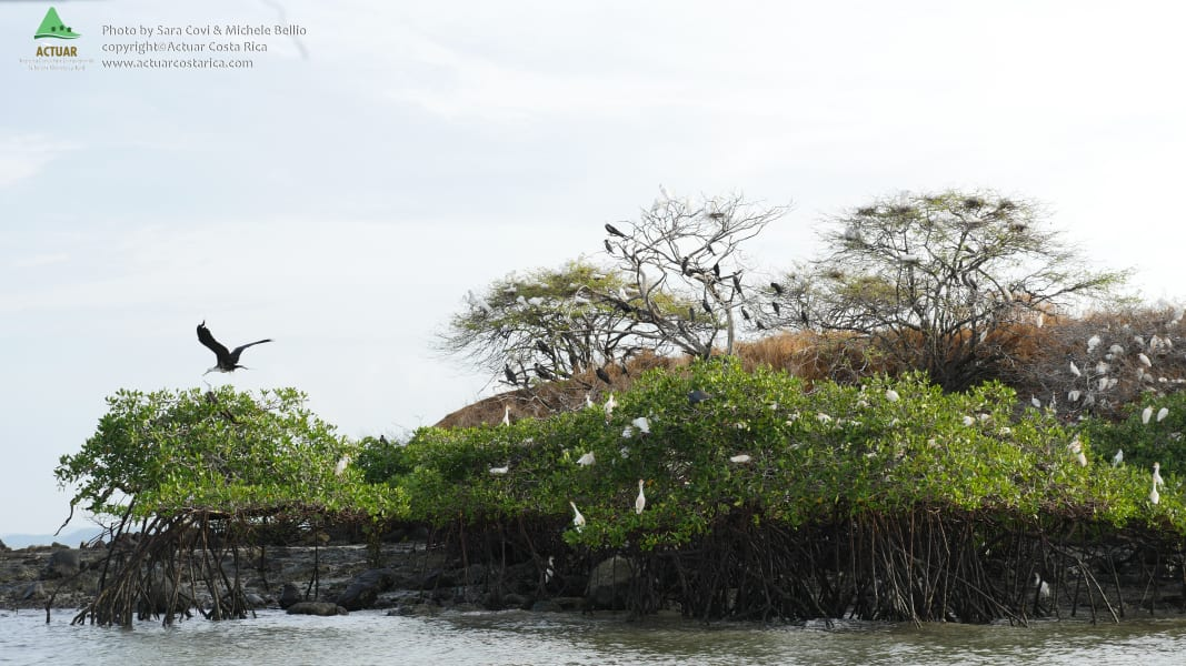 ACTUAR Isla Chira Treasure of the Choretega Princess Isla Chira Costa Rica null