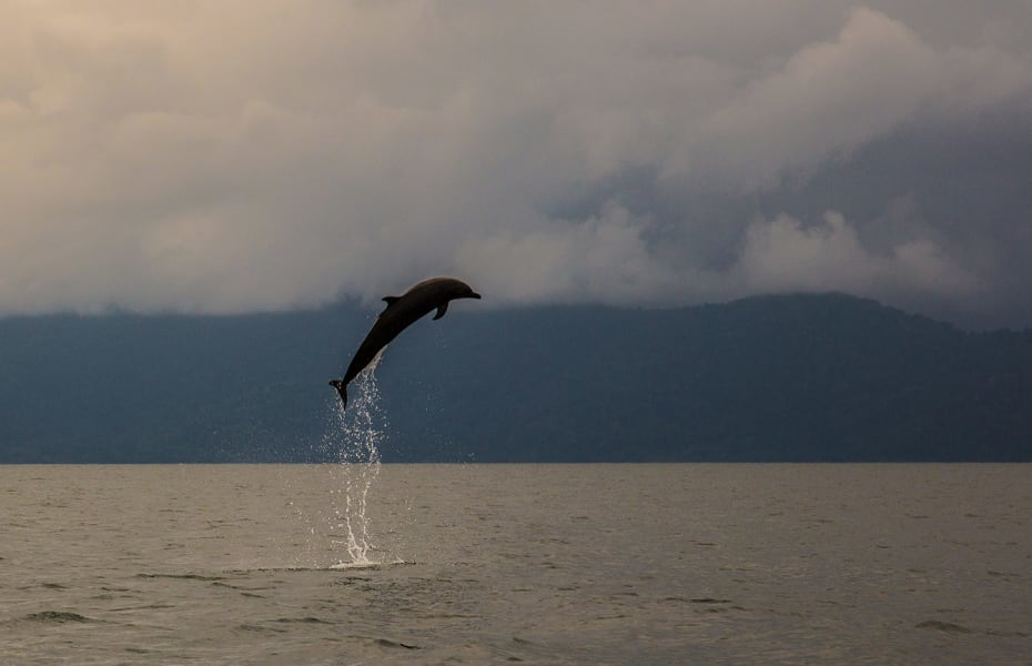 Osa Rural Tours Dolphin and Whale Spotting on Golfo Dulce Rincon Costa Rica undefined