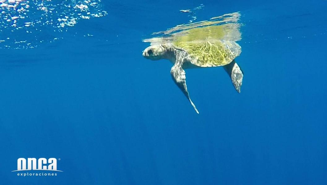 Onca Explorations Wild Dolphin Adventure Mazatlan Mexico undefined