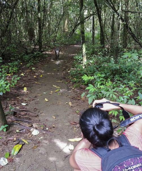 Osa Wild Travel Corcovado Trek and Overnight in Sirena Ranger Station Puerto Jimenez to Drake Bay Costa Rica undefined