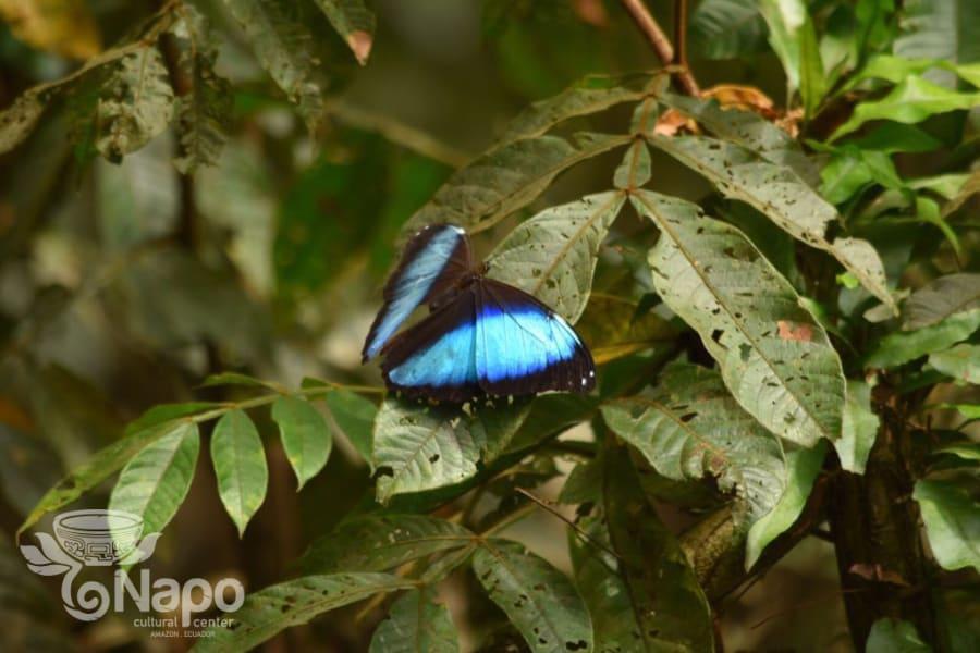 Napo Cultural Center Yasuni National Park Ecuador null