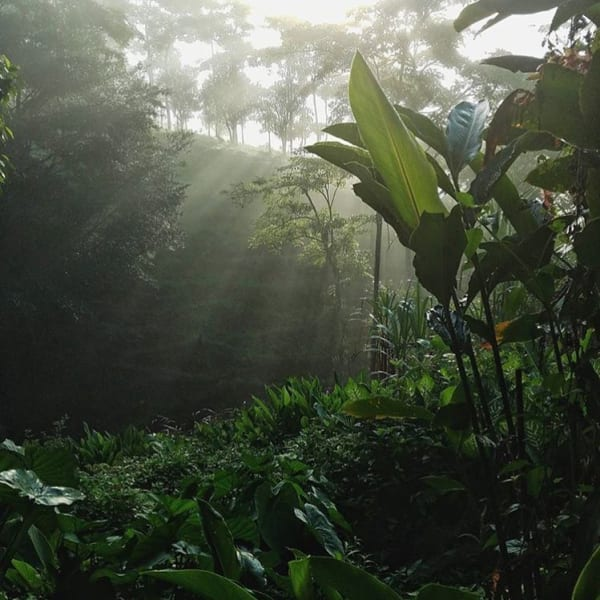 La Iguana Chocolate Company and Lodge Mastatal Costa Rica undefined