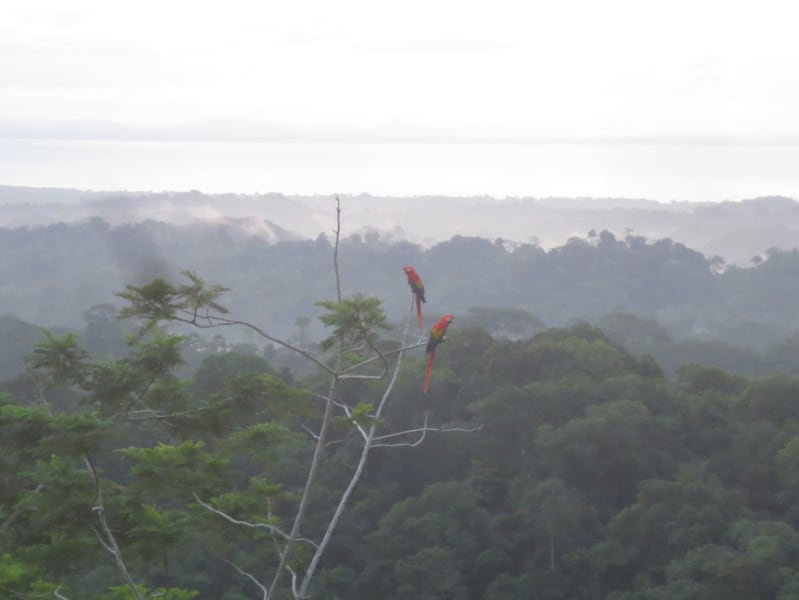 Lokal Adventures Epic Osa Rainforest Adventure Osa Peninsula Costa Rica The stunning view from Xiña's cabin!