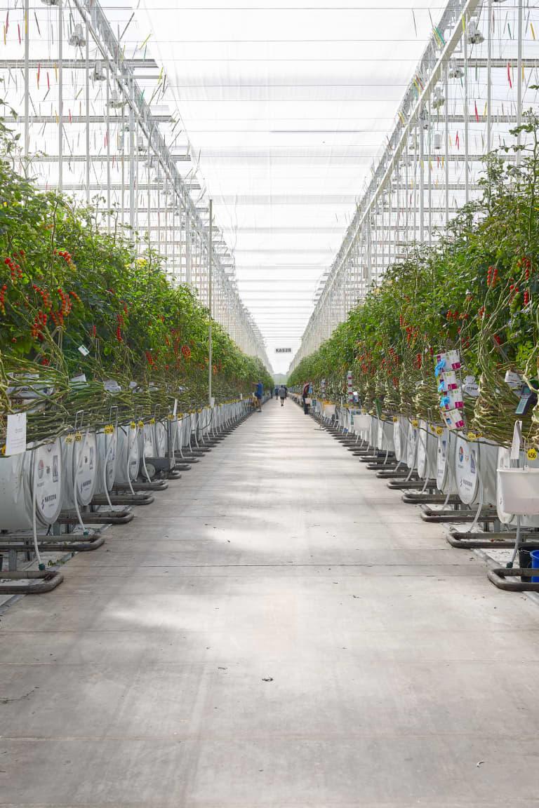 Looye greenhouse