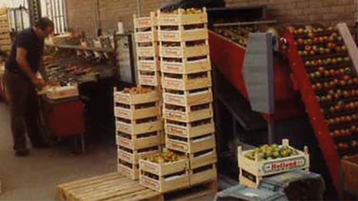 Jos Looije specialiseert zich in tomaten.
