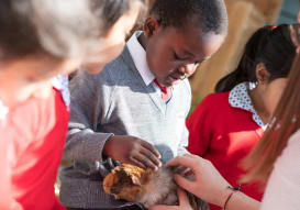 Fairfield children look after a hamster