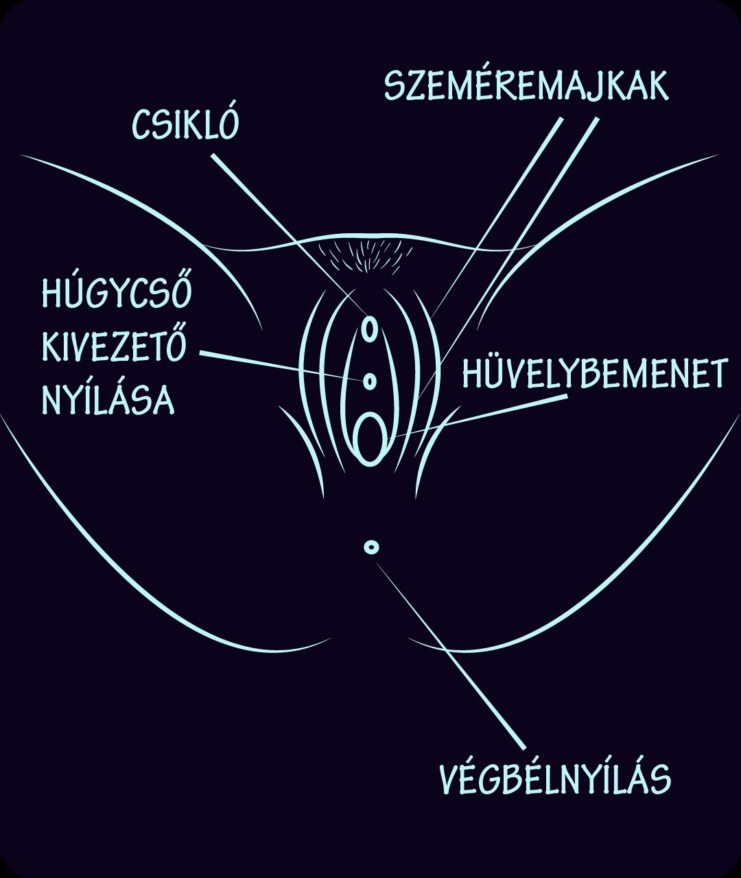 penic kép