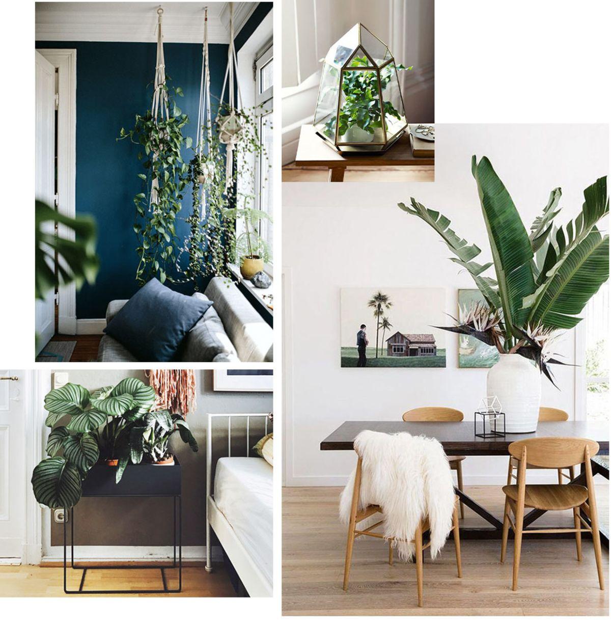 Piante Da Arredo Appartamento i fiori e le piante da interno e d'appartamento di cui ti