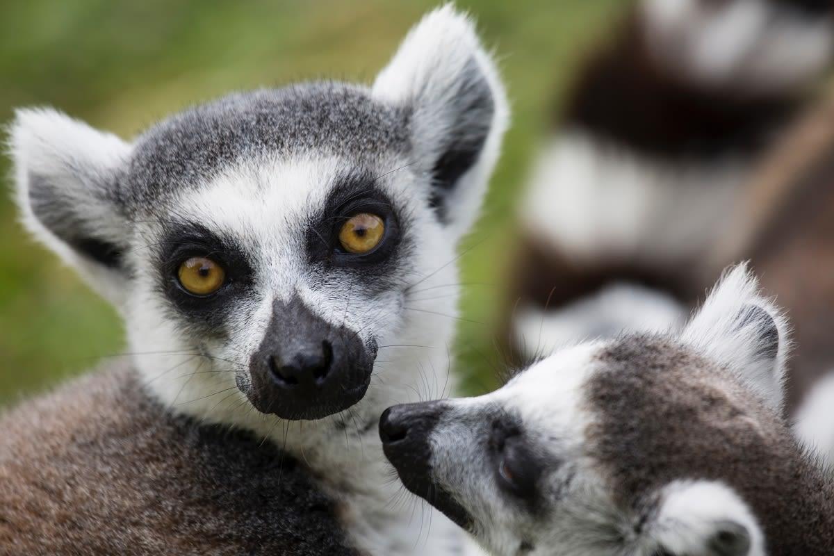 Madagascar - Diana Parkhouse - Unsplash