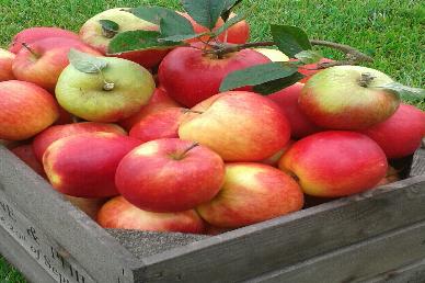 2kg Gala Apples