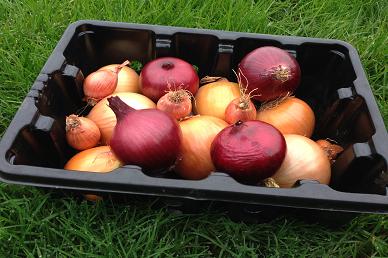 2kg Onions