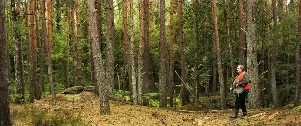 demonios-y-bosques-2