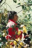 Helen  A. Brightman
