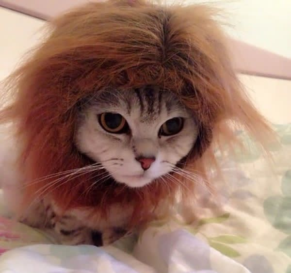 gato-leao-enfeite-pet-aliexpress